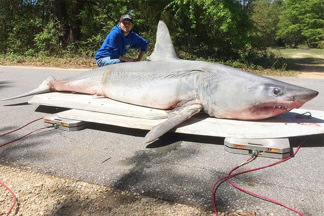 Fisherman Catch Record Breaking Mako Shark