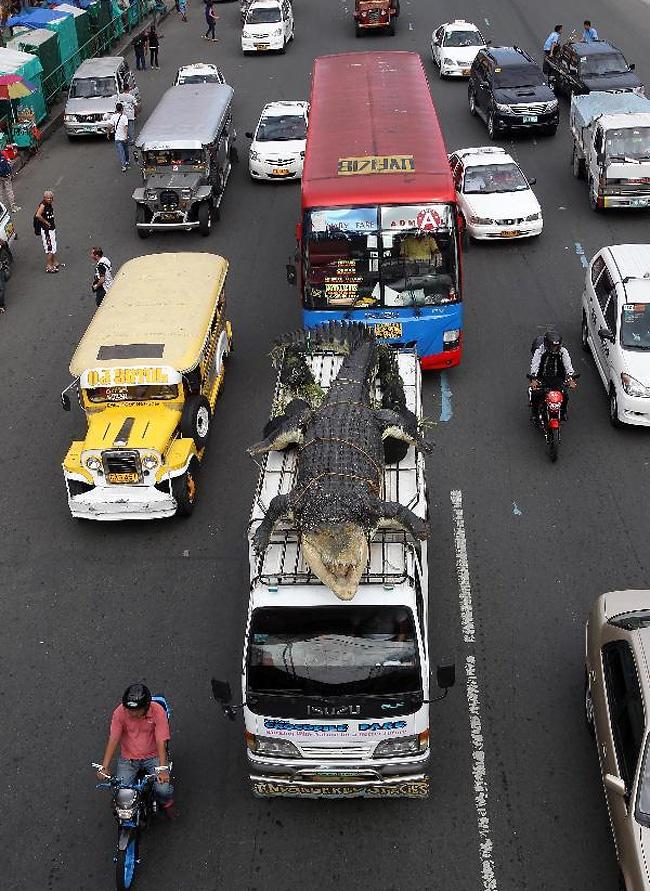 "Robot Crocodile ""Longlong"" in Philippines"