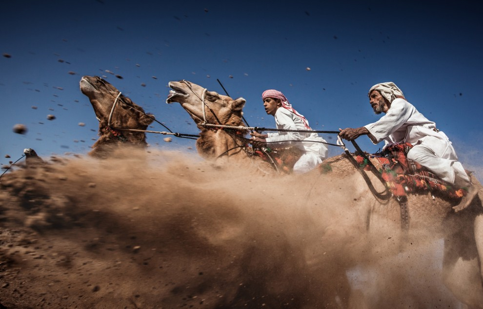 (Camel Ardah) As it called in Oman, its one of the traditional styles of camel racing between two camels controlled by expert men, the faster camel is the loser one, so they must be running by the same speed level in the same track