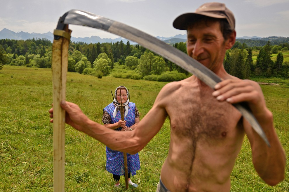 Traditional haymaking in Poland. Many people continue to use the scythe and pitchfork to sort the hay.