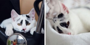 Take A Look At This Cute Adopted Cat With Funny Markings