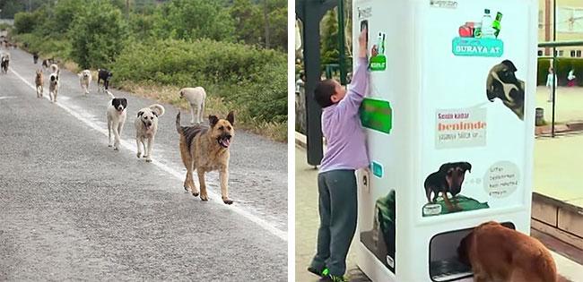 This Ingenious Vending Machine Feeds Homeless Animals