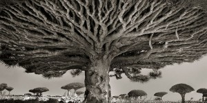 This Woman Has Dedicated Her Life To Taking Pictures Of The Oldest Trees On The Planet
