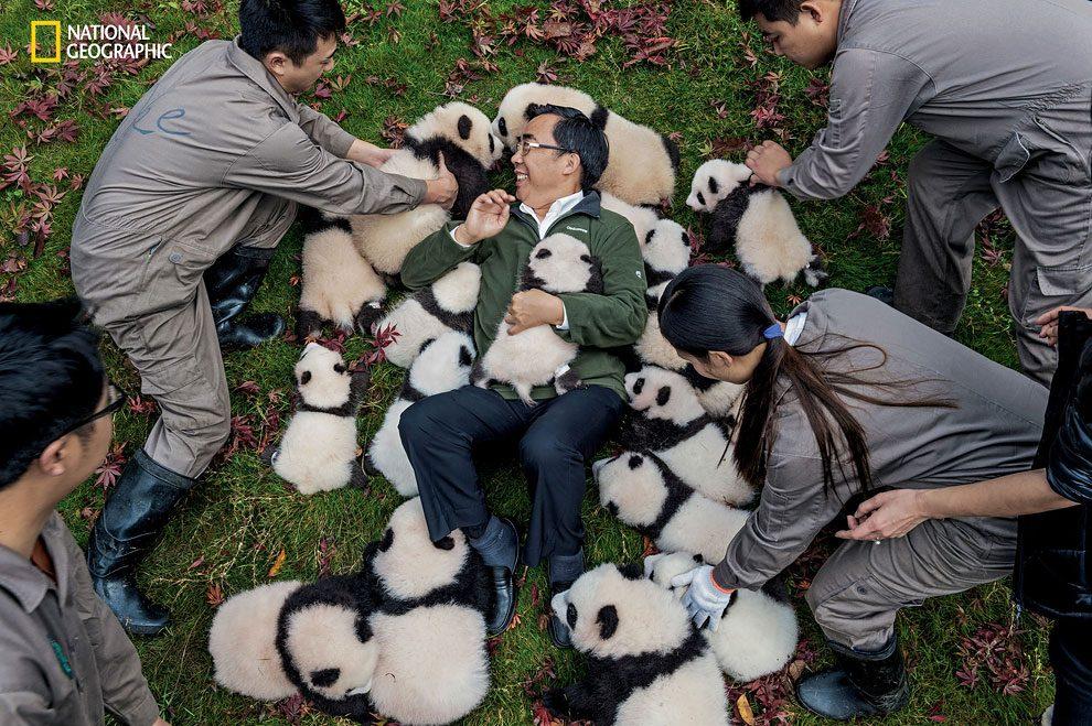Rewilding-pandas-NGM_082016_MM8391_Logo_002