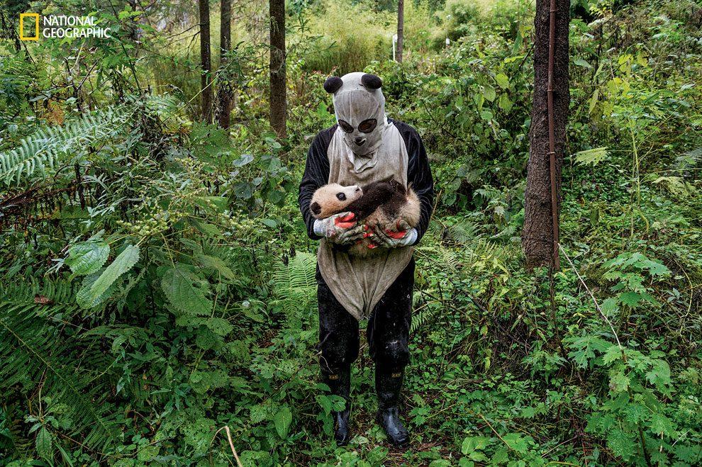 Rewilding-pandas-NGM_082016_MM8391_Logo_003