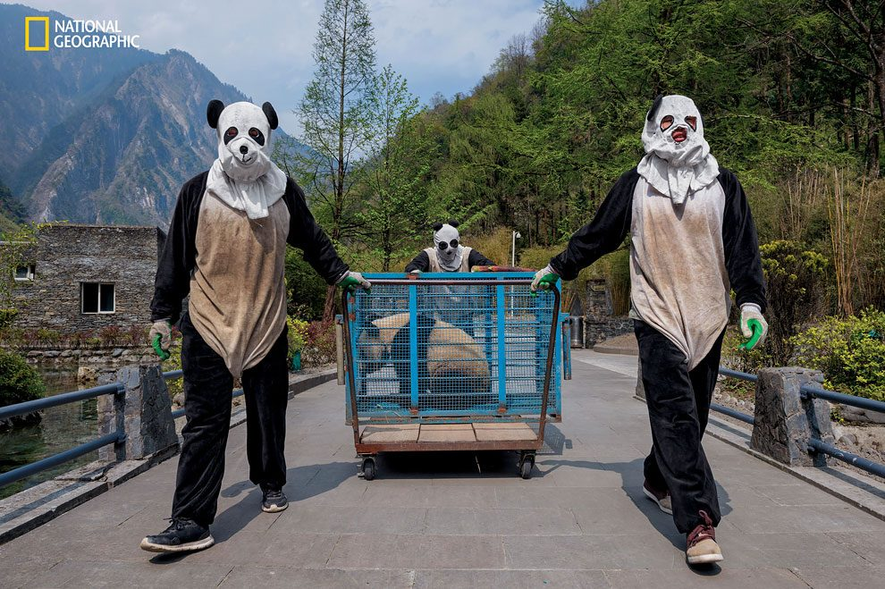 Rewilding-pandas-NGM_082016_MM8391_Logo_009