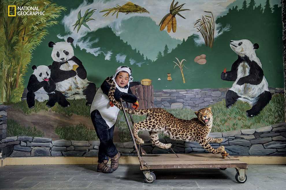 Rewilding-pandas-NGM_082016_MM8391_Logo_010