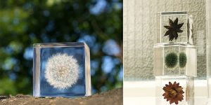 The Real Objects Of Nature Preserved In Acrylic Cubes