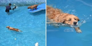 Man Builds 2,000 Square Meters Swimming Pool For Dogs