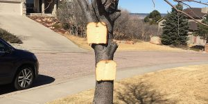 There's An Online Community About Stapling Bread To Trees