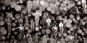 Vintage Photos Of Lumberjacks Who Felled Big Trees Using Only Hand Tools In The Early 20th Century