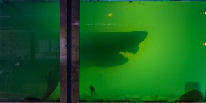 A Great White Shark Preserved In Formaldehyde In An Abandoned Wildlife Park