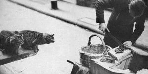 Amazing Vintage Photographs Of Cat's Meat Sellers In London In The Early 20th Century