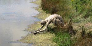 Sophie Prestigiacomo's 'Homo Algus' Invites Swamp Creatures Out Of The Wild