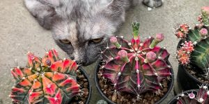 Wonderful Cactuses And Desert Plants Photography By Wachirapol Deeprom