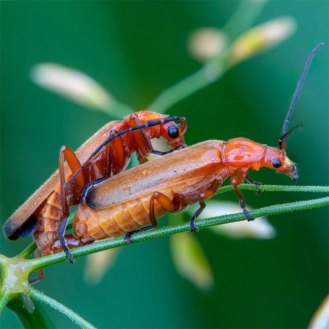The Worlds Most Romantic Gallery Of Insect Sex