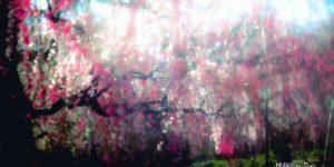 Beautiful Photos of Sakura Blooming in Japan by Hidenobu Suzuki
