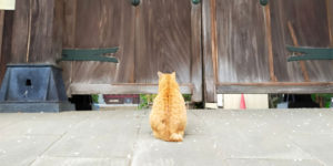 """Excommunicated"" Cat Waits to Be Absolved of Feline Sins Outside Temple Gate"