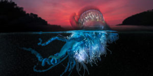 The Most Impressive Photos From The Ocean Photography Awards 2021 Finalists