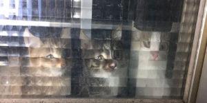Low Resolution Pets Behind Pixelated Glass Doors