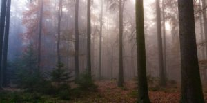 Photographer Captures The Mystical Beauty of Czech Forests
